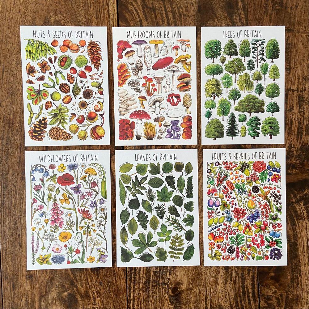 British Widlife Flashcards - plant life  - Pack of 6