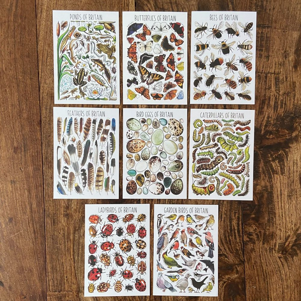 British Widlife Flashcards - small creatures  - Pack of 8