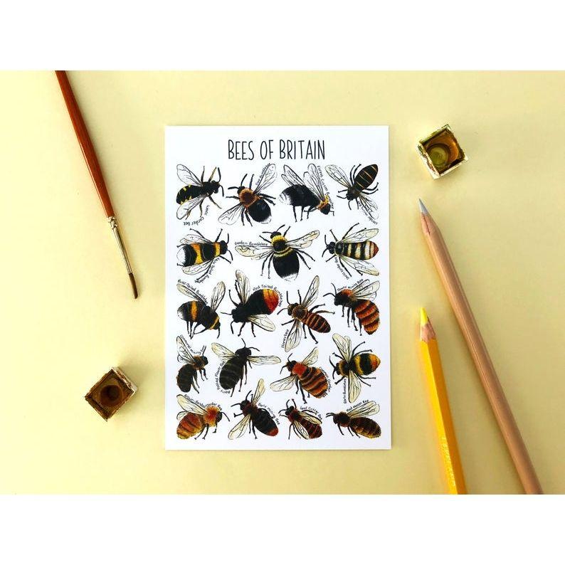Bees of Britian Flashcard