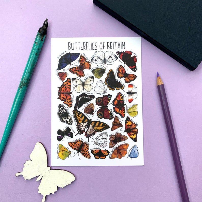Butterflies of Britian Flashcard