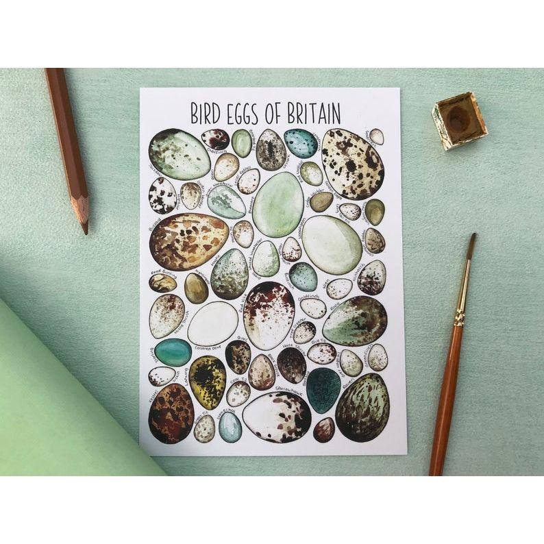 Bird Eggs of Britian Flashcard