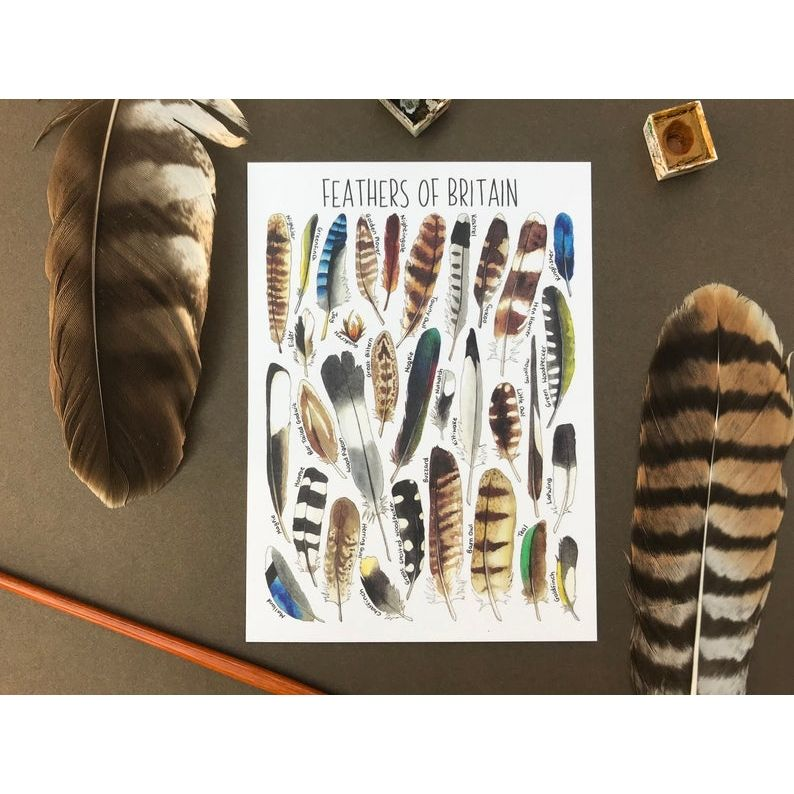 Feathers of Britian Flashcard