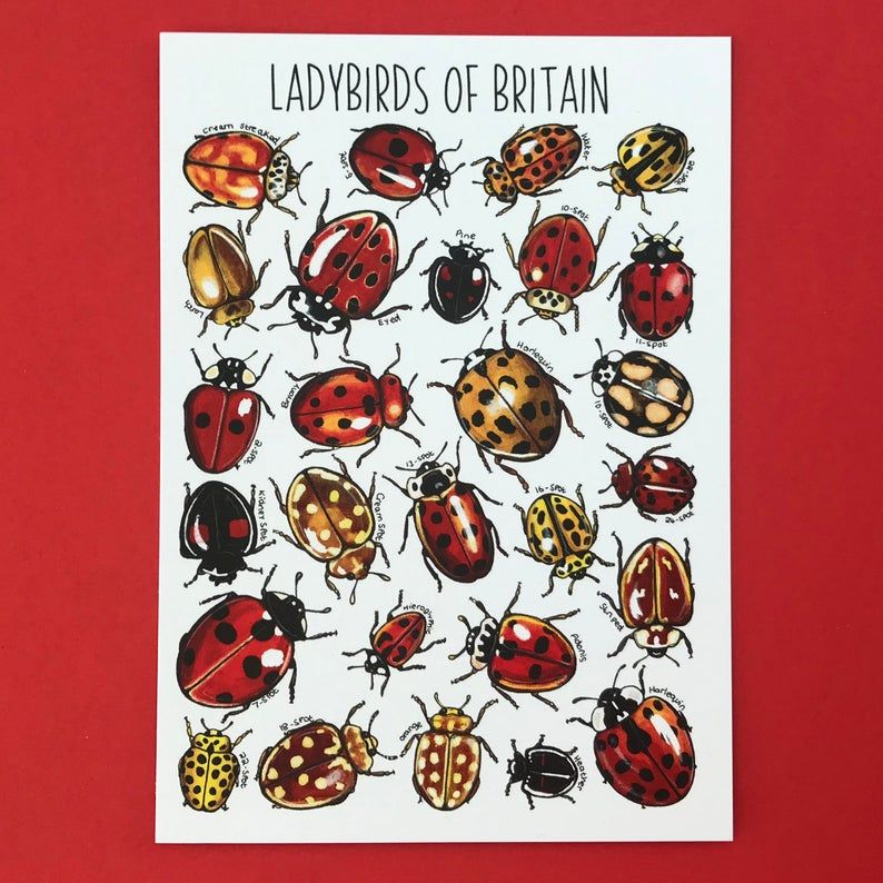 Ladybirds of Britain