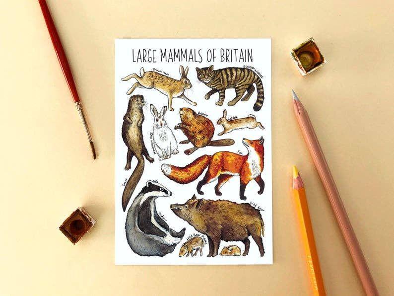 Large Mammals of Britain
