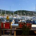 Duck at port soller mallorca
