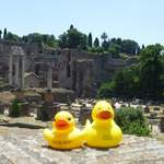 duck & friend at the rome forum