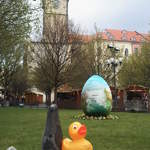 Duck In Prague At Easter