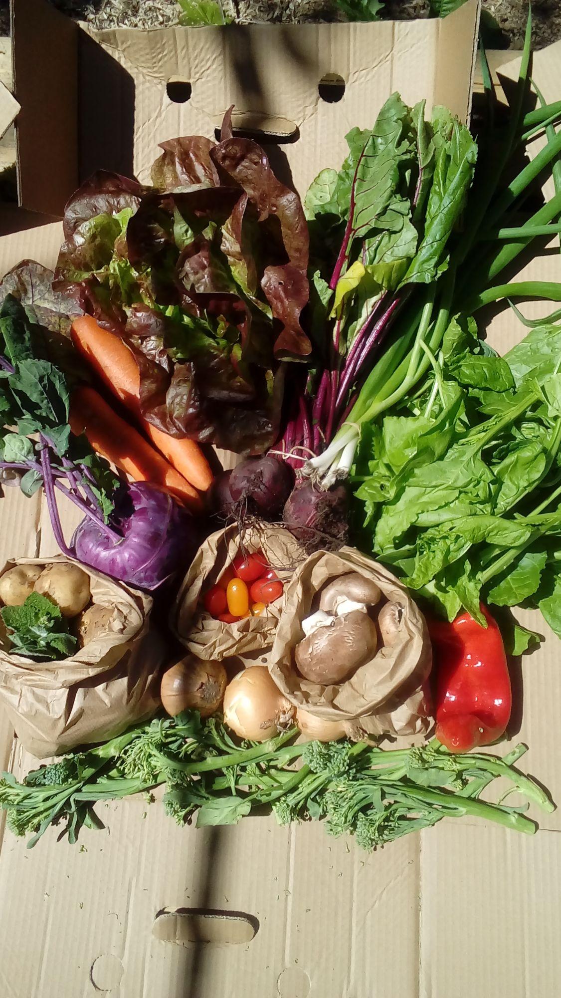 veg box large 20200625_143000
