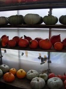 PumpkinStorage
