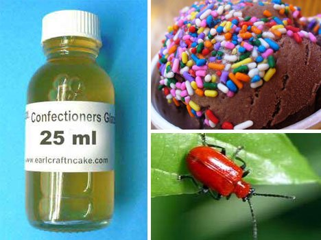 confectioners-resinous-glaze-lac-insect-beetle