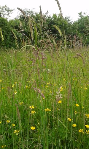Grass PCC & Mindfulness