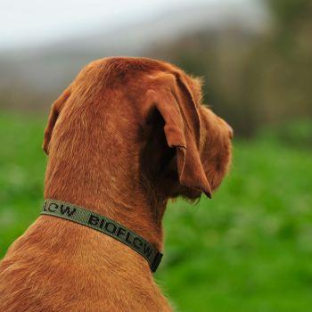 Bioflow Dog Collar - Olive