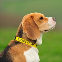 Bioflow Yellow Dog Collar