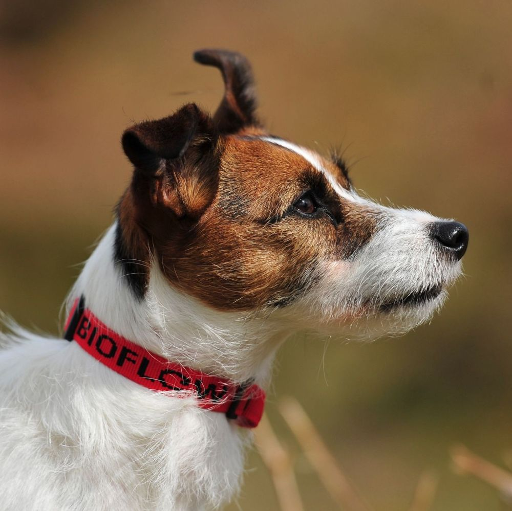 Bioflow Red Dog Collar