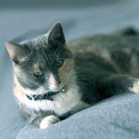 Bioflow Cat Collar