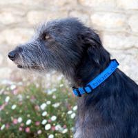 Bioflow Dog Collar - Blue