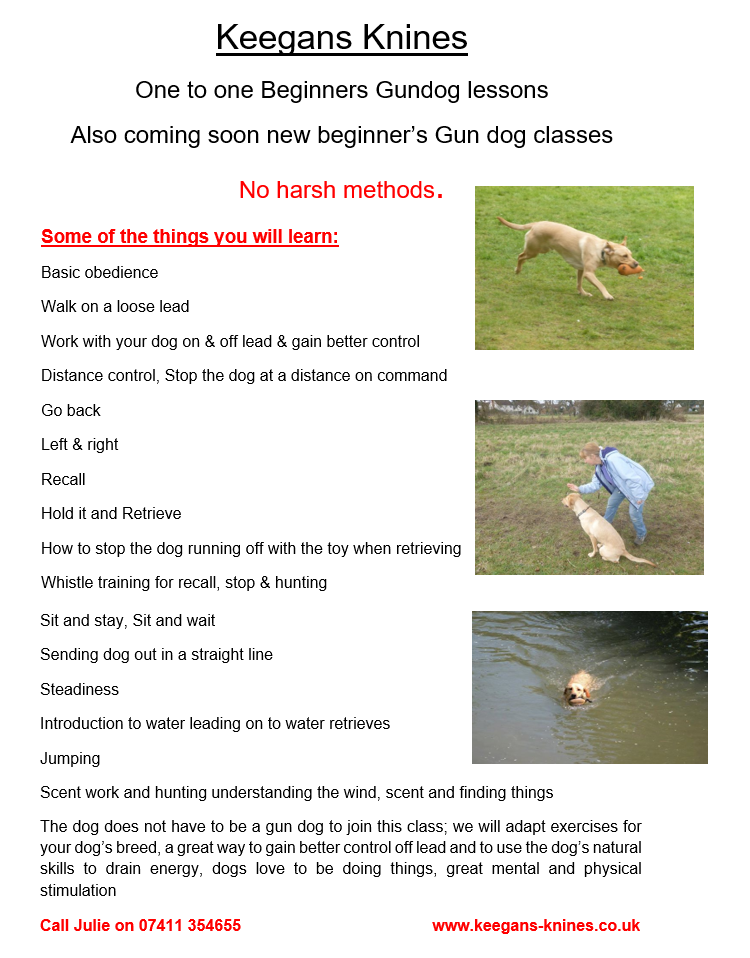 gun dog flyer june 2016