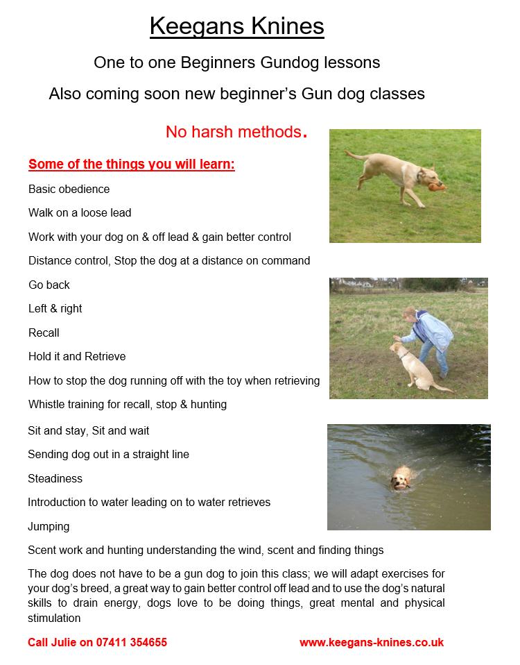 gun dog flyer june 2016