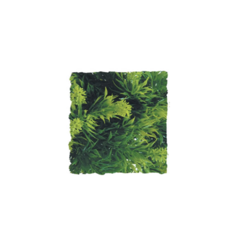 <!--023-->Malaysian Fern MEDIUM