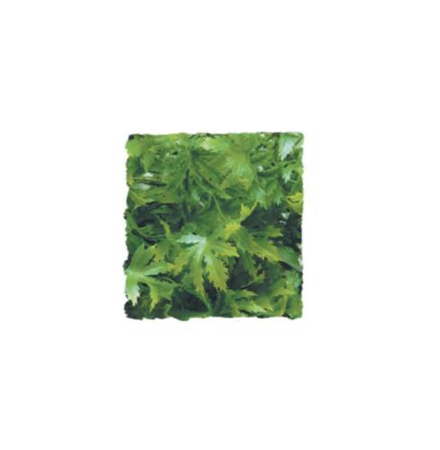 <!--014-->Cannabis MEDIUM