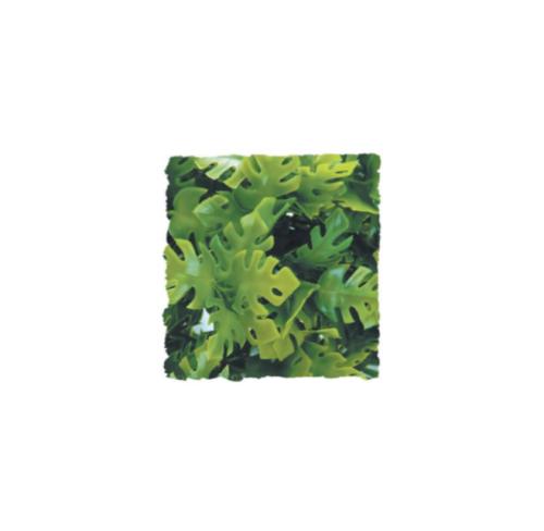 <!--001-->Amazonian Phyllo SMALL