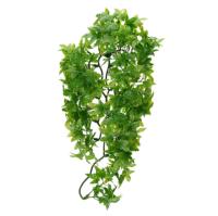 <!--11-->Plants & Decoration