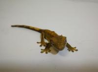 <!--01-->Lizards