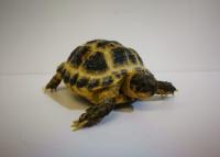 <!--03-->Tortoise