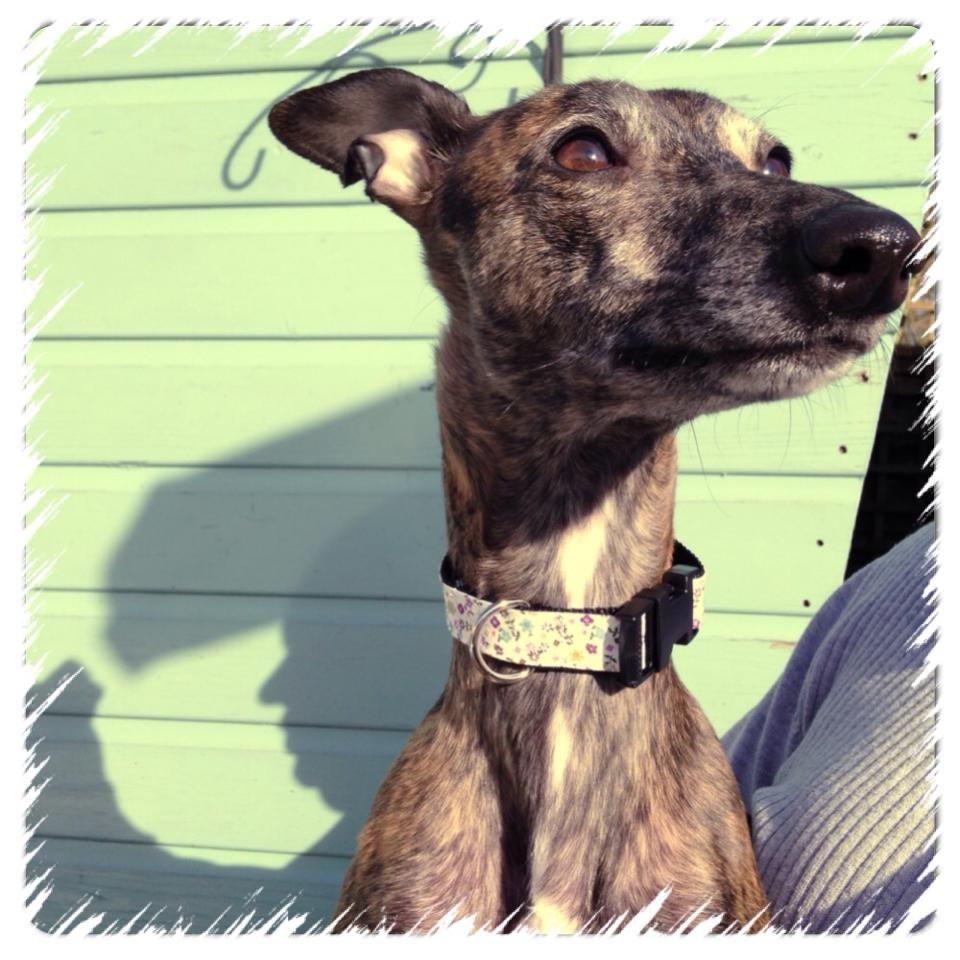 Make a Dog Collar & Lead Set