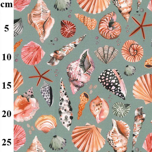 Cotton Canvas Sea Shells