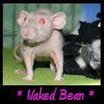 Naked Bean Memorial
