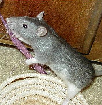 Rattigan