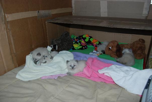 foster kittens 2