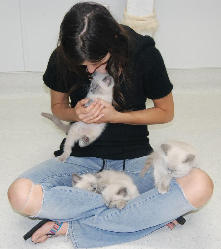 Foster Kittens 4