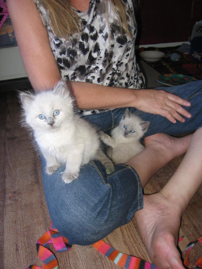 foster kittens 6