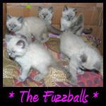 Fuzzballs Memorial