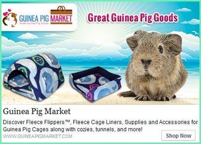 Shop Guinea Pig Market