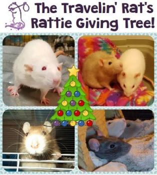 Rat Giving Tree