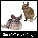 Chinchillas & Degus
