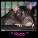 Bosco Memorial