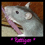 Rattigan Memorial