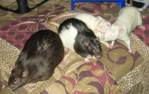 Gizmo, Nibs, Bosco and Bug