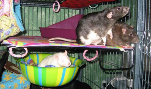 Gizmo, Merlin and Bug