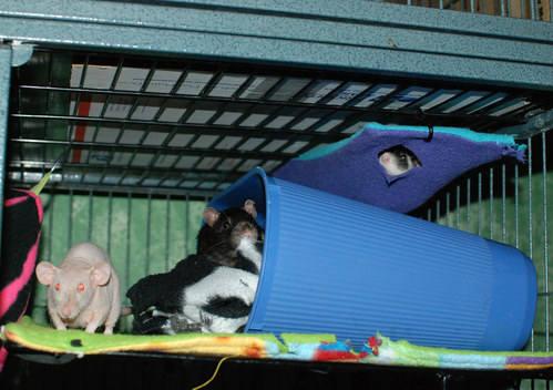 Bean, Pogo and Minca
