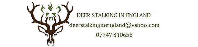 stalkinginengland , site logo.