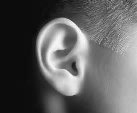 Black and white picture of ear