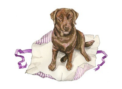 Chocolate Lab - pack of Christmas cards