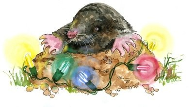 Mole - pack of Christmas cards