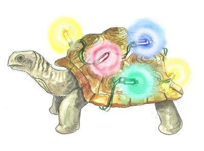 Tortoise - pack of Christmas cards