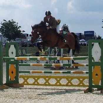 Shingle Hall Tzar at Foxhunter Regionals